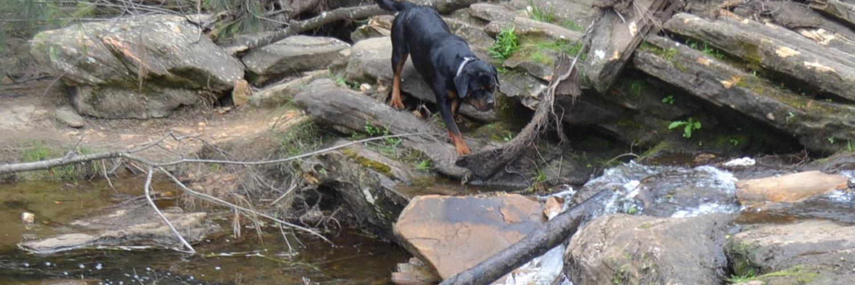 Vanaheim Rottweilers